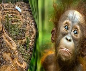 продуктите убиващи горите