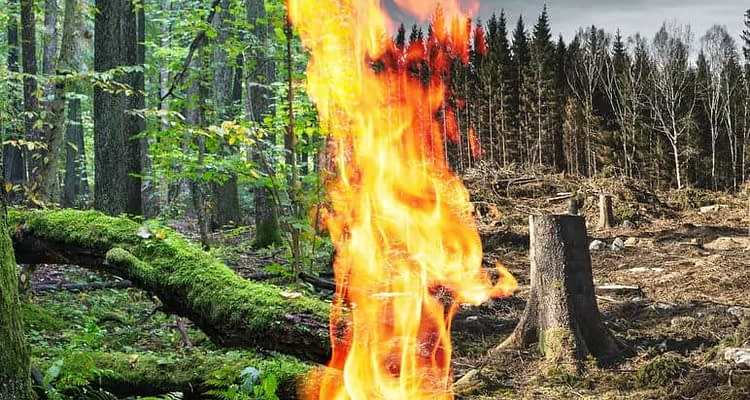 collage forest burn clearcut.jpg
