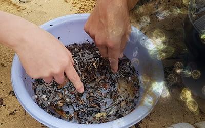 Учени-премахват-микропластмасата-от-природата