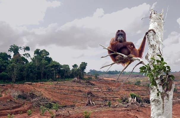 от палмовото масло