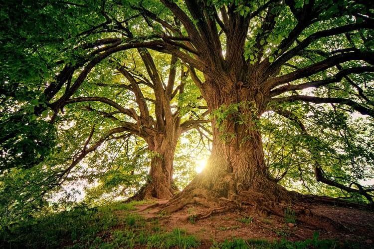Дърветата-общуват