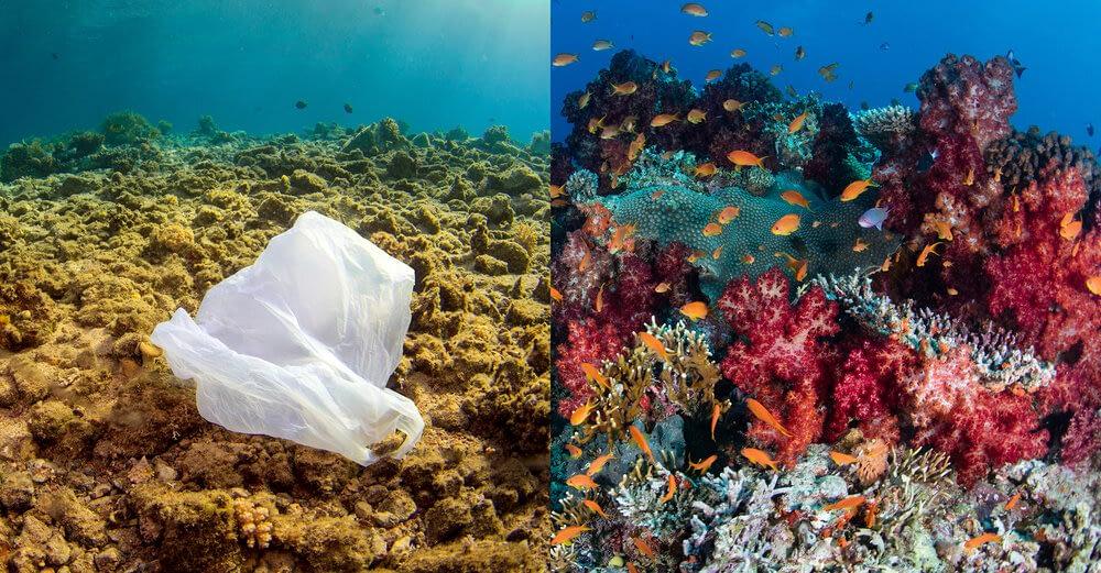 Избледняване коралови рифове