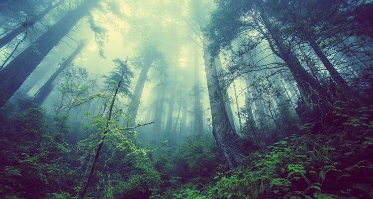 Изчезването-на-горите