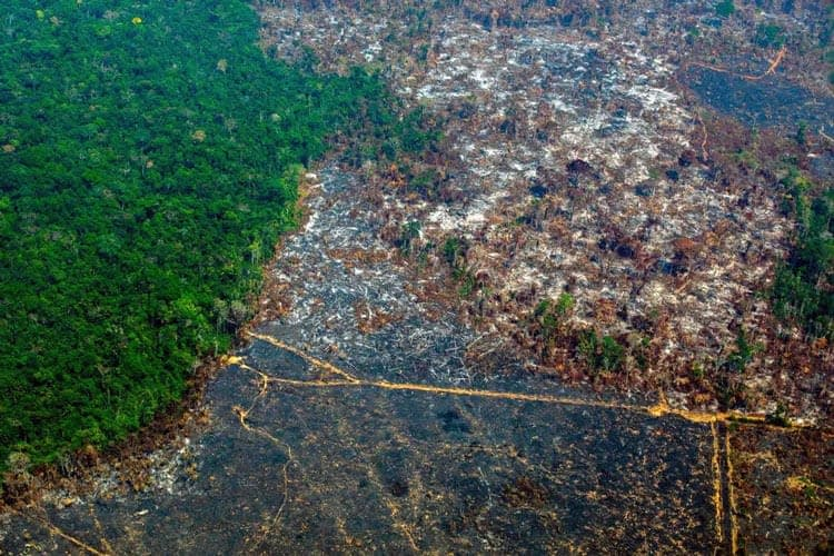 Обезлесяване-Амазония