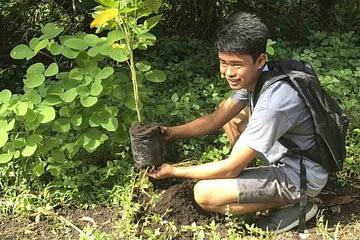philippines plant tree 750x392 1