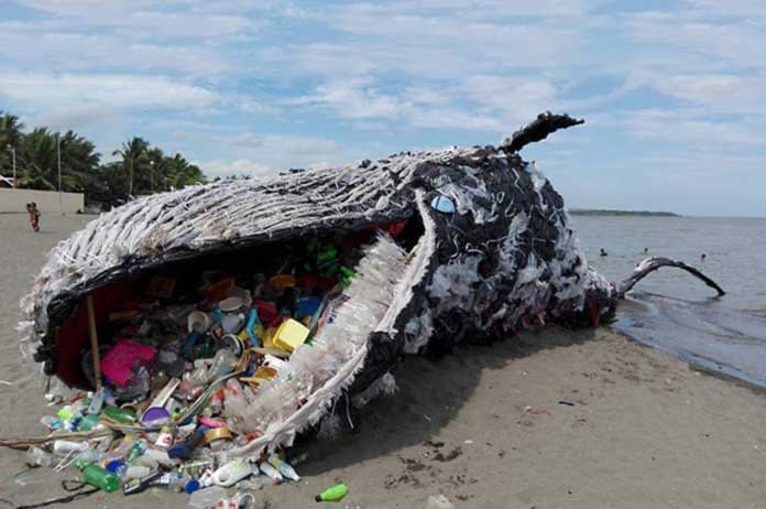 Giant Dead Whale 1 Is Haunting Reminder of Massive Plastic Pollution Problem