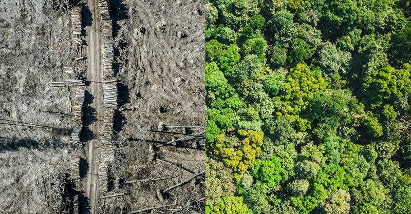 Обезлесяване в Амазония