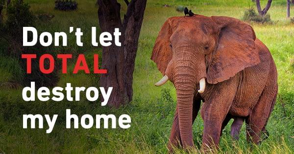 42583 Elephant Facebook